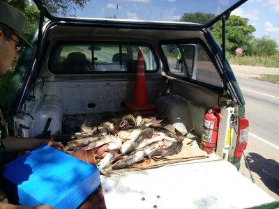 Incineraron bagres incautados por pesca masiva y sin autorización