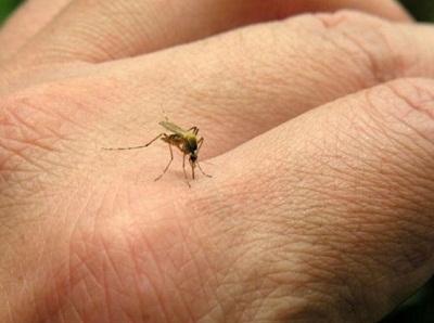 Villa Nueva formó un comité de lucha contra el dengue