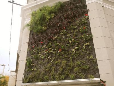 ¿Llega la tendencia de jardines verticales al centro de Villa María?
