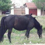 caballo-con-parajitos