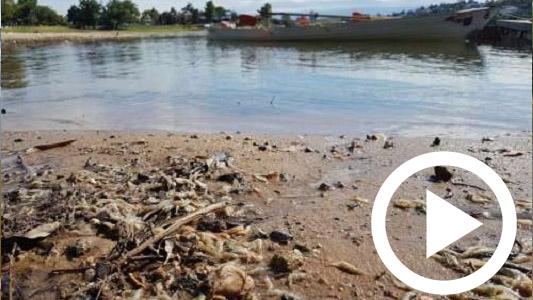 Aparecen de nuevo peces muertos en el lago San Roque