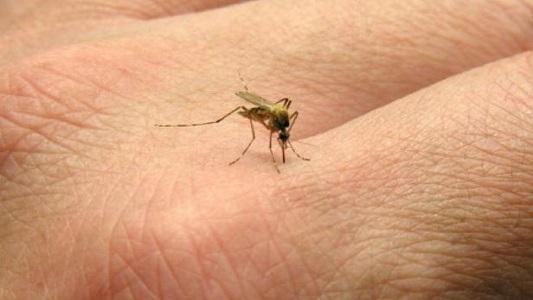 Analizan posible caso de Dengue o Zika en un camionero
