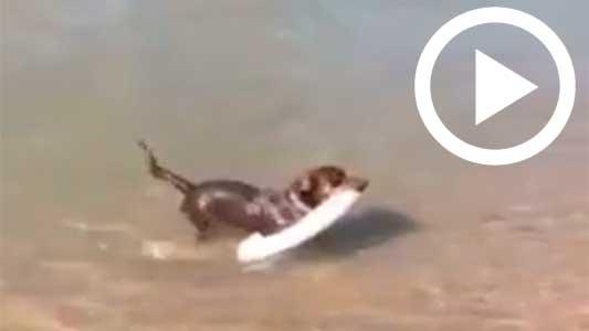Mirá la habilidad de Paco, el perro que saca la basura del río