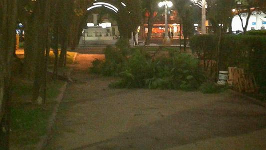 Fuerte viento provocó caída de árboles, postes, carteles y cables