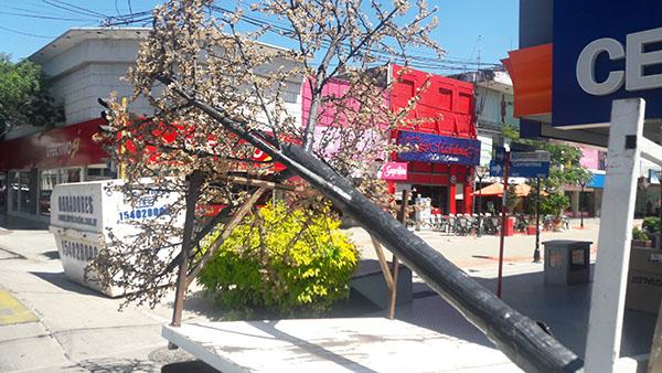 """En medio de las reformas del centro, """"desforestaron"""" la peatonal"""