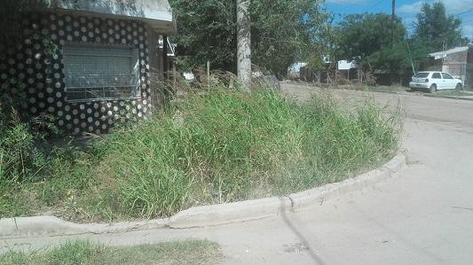 Concejales piden que atiendan reclamos de vecinos del Carlos Pellegrini