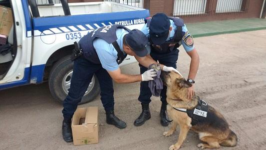 Rastrillaron con perros buscando a la joven desaparecida