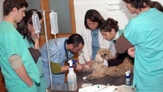La carrera de Medicina Veterinaria de la UNVM cumplió 10 años