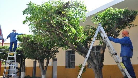 Poda de árboles: Todo lo que tenés que saber para evitar multas