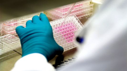 Hepatitis: quieren saber si sigue siendo alto el índice de infectados