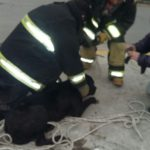 Rescate perro alcantarilla 01