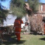 bomberos vilal nueva rescate gatos (1)