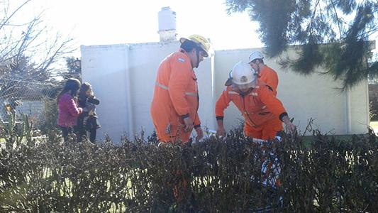 bomberos villa nueva rescate gato (2)