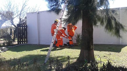 bomberos villa nueva rescate gato (4)