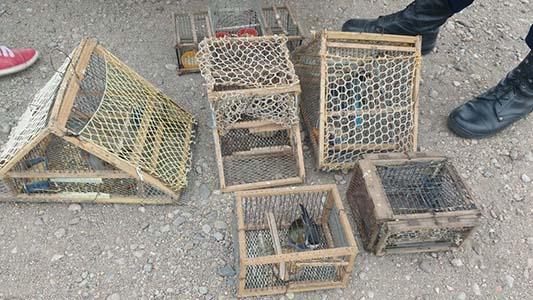 Fauna provincial ya rescató casi 800 aves ilegales en operativos