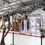 muestra dinosaurios medioteca vive y siente 2017 (1)