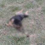 perros-muertos