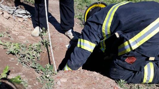 Perro cayó a un pozo y bomberos debieron rescatarlo