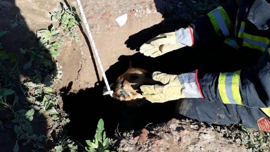 rescatan perro villa nueva bomberos 3
