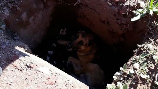 rescatan perro villa nueva bomberos 4
