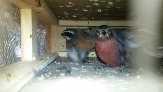 secuestro de aves gendarmeria 1