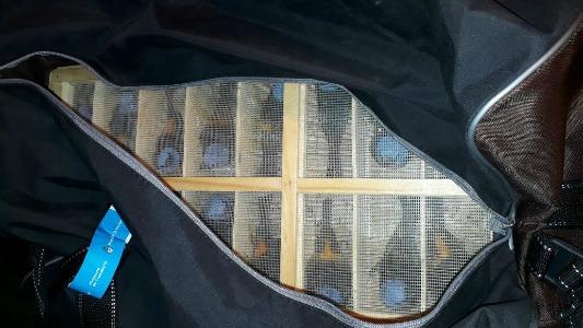 Trasladaba 130 aves en la bodega de un colectivo