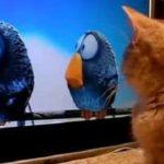Gato frente al tele