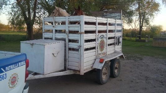 caballos robados 2