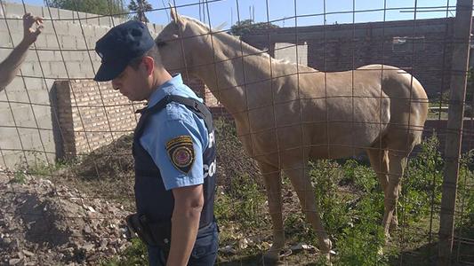 Recuperan caballos robados: estaban en una obra del San Martín