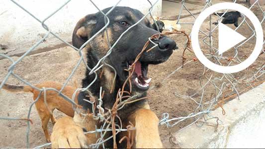 Qué quiere hacer el Municipio con el centro de adopción de perros