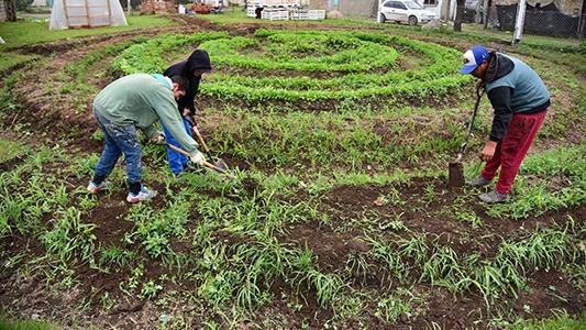 Jóvenes que eligen producir en terrenos baldíos de La Calera