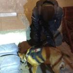 allanamiento por droga cocaina marihuana (1)