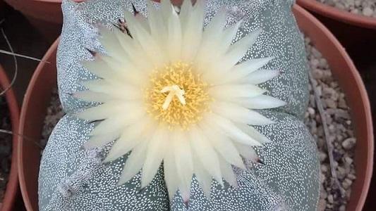 Se viene exposición de cactus exóticos y del extranjero en Villa María