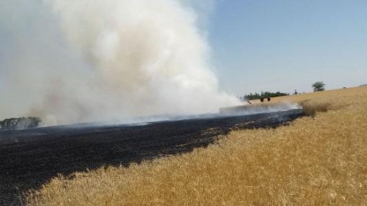 Se le prendió fuego la cosechadora y perdió 60 hectáreas de trigo