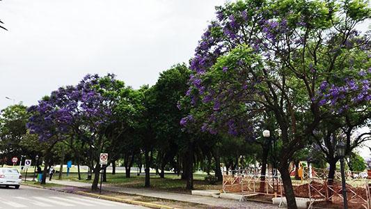 Censarán los árboles de la ciudad con una aplicación de celular