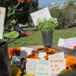 plantines por residuos plantas flores feria