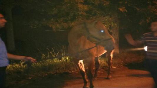 Final feliz para el caballo en aparente estado de maltrato