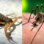 alacran y dengue