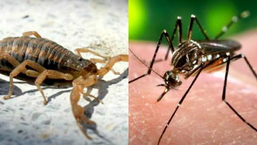 Cómo darle pelea a los bichos que nos atacan en verano