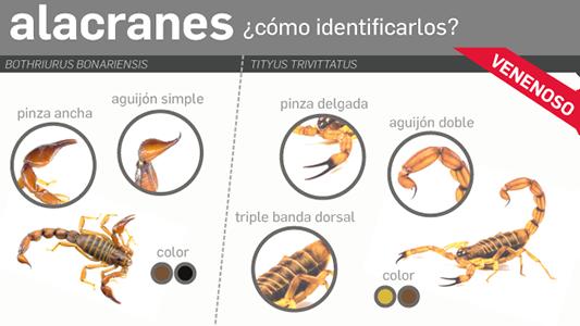 alacranes-web