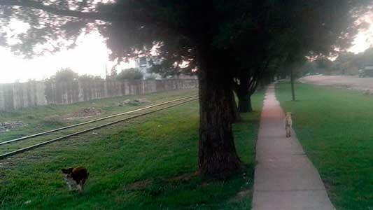 perros-callejeros-en-La-calera-(6)