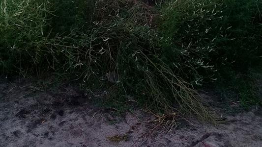 ultima playa rio costanera mal cruce con ruta 2 3