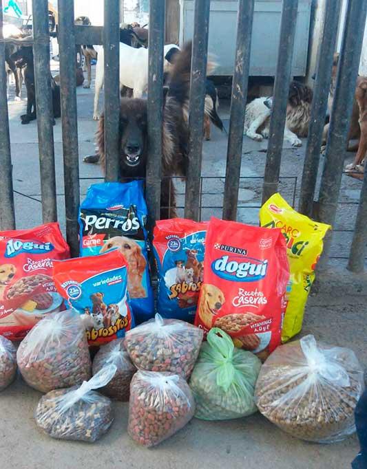 luana-peralta-donacion-alimentos-balanceado-protectora-(6)