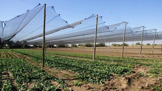Adiós granizo: productores tienen tejidos para cuidar sus cultivos