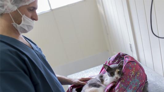 Bel Ville: realizaron 205 castraciones de perros y gatos en lo que va del año