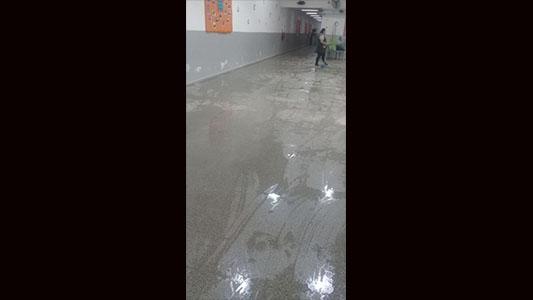 jardin inundado 4
