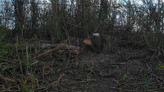 Denuncian un segundo desmonte de especies nativas cerca de Tio Pujio