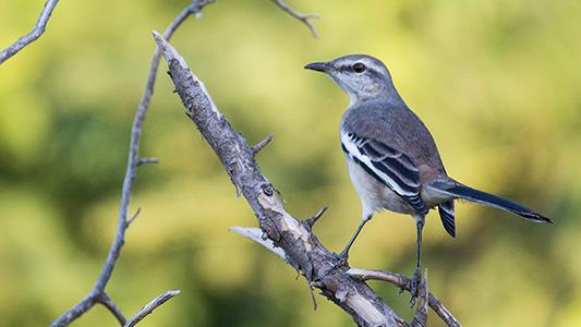 Cámara en acción: cazador fotográfico identifica más de 100 especies de aves en la zona