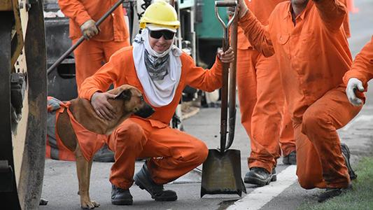 El perro adoptado por los trabajadores de Vialidad