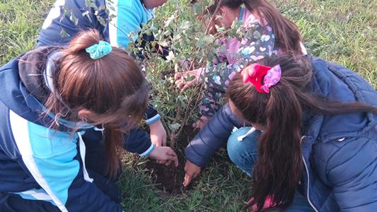 Villa Nueva: Estudiantes y docentes plantaron 14 árboles